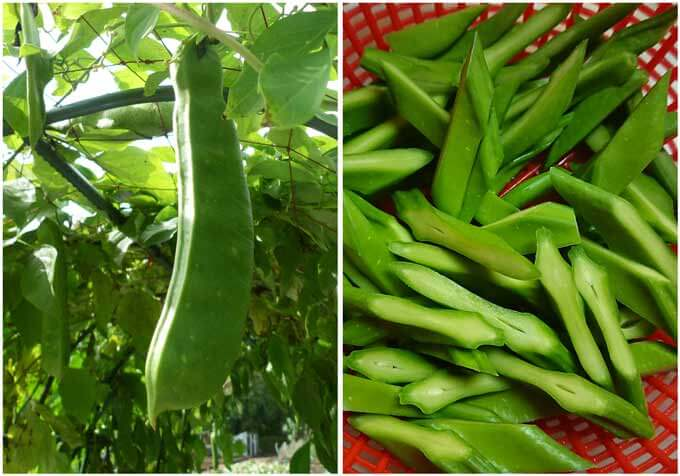 Sword beea pods and sliced sword bean pods.