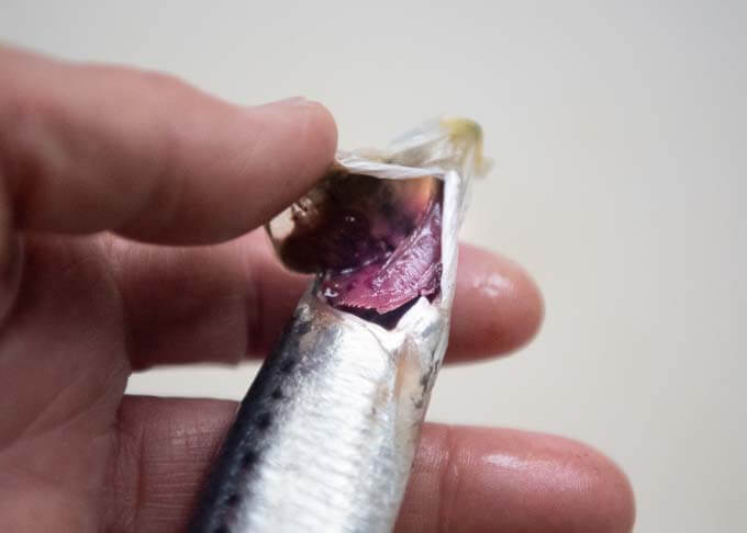 Showing bright red gills of a sardine.